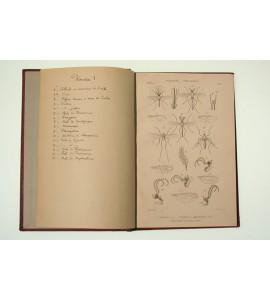 Histoire naturelle des insectes